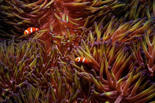 119791-الشعاب-المرجانية