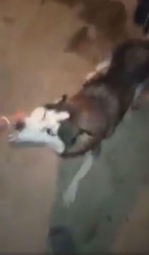 الكلب يهاجم الطفلة