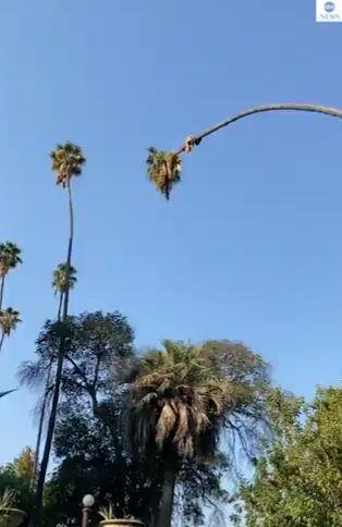 الرجل يقطع جذع الشجرة
