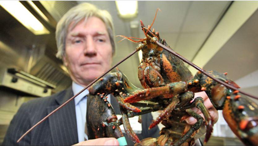 تاجر الأسماك البريطانى مع حيوان الكركند
