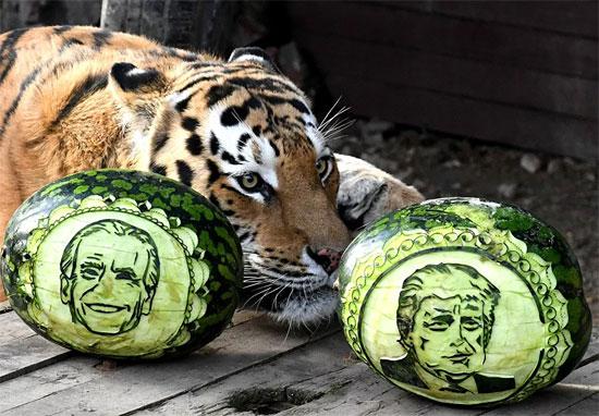 نمر يختار بين ترامب وبايدن