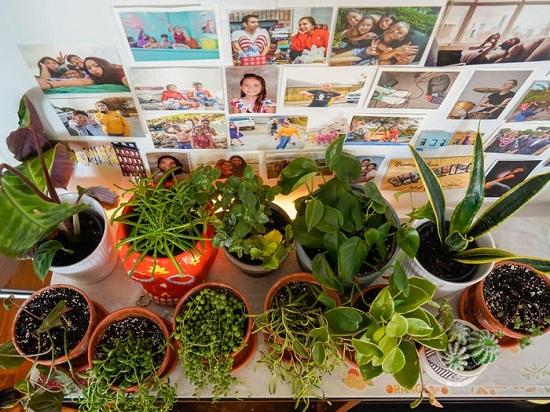 بعض النباتات