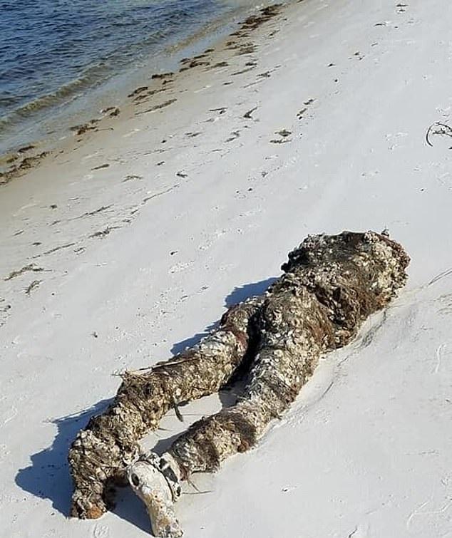 بلاغات بعد العثور على مانيكان يشبه جثة مقطوعة الرأس على شاطئ بأمريكا (1)