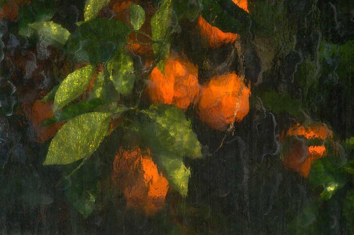 برتقال خلف لوح زجاجى