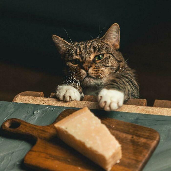 قطة تحاول سرقة الجبن