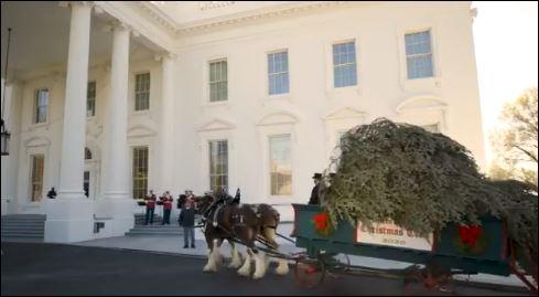 ميلانيا ترامب تستقبل أخر شجرة كريسماس في عهد الرئيس الأمريكى (2)
