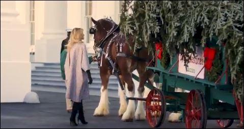 ميلانيا ترامب تستقبل أخر شجرة كريسماس في عهد الرئيس الأمريكى (1)