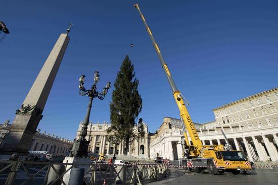 شجرة عيد الميلاد في الفاتيكان