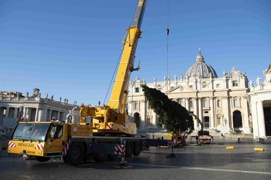لحظة رفع شجرة عيد الميلاد