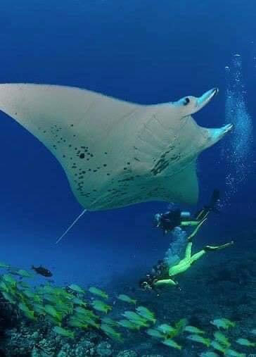 الغطس وسط الكائنات البحرية
