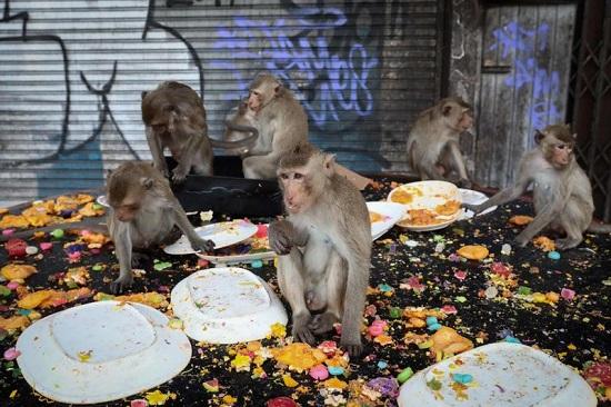 يتوافد السياح سنويًا لمشاهدة العيد المجنون