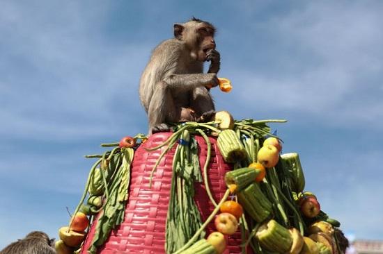 قرد يأكل الخضار أمام معبد برانج سام يود