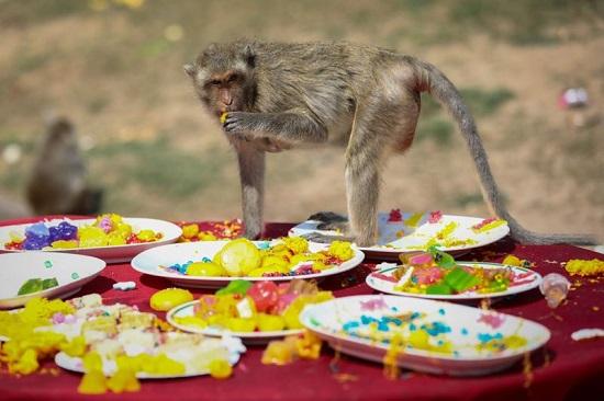 قرد يأكل الطعام من طاولة أمام معبد في بانكوك