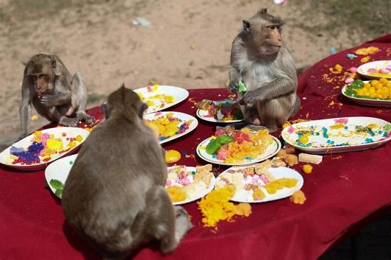 القرود تأكل الطعام من طاولة أمام معبد برانج سام يود