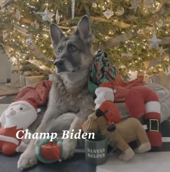 كلب يتبناه جو بايدن يحتفل بالكريسماس