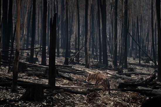 إستراليا تكافح أحد أسوأ مواسم حرائق الغابات في تاريخها