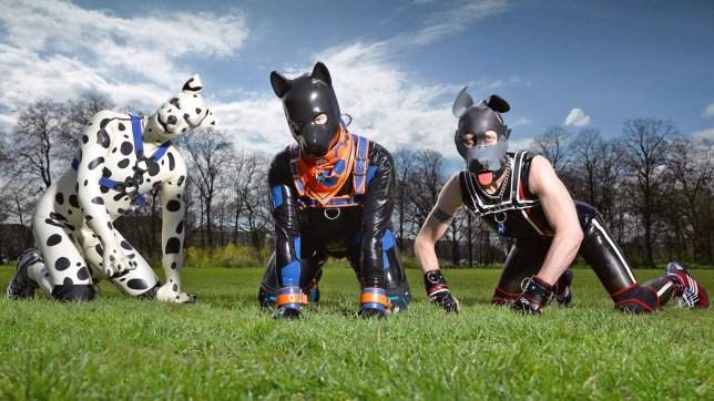 secrets-of-human-pups