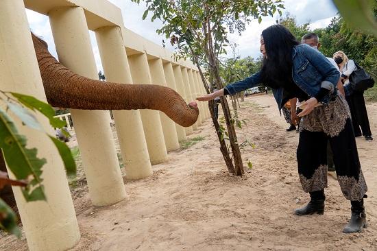 المطربة شير والفيل كافان