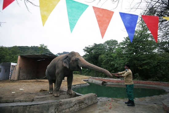 كافان استقر في كامبوديا بعد معاناته في باكستان