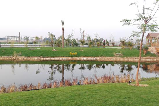 بحيرة عين الصيرة بالقاهرة تتحول لجنة خضراء (7)