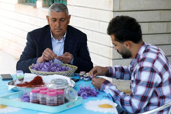 عادل صبوح صاحب أول مزرعة للزعفران الأردني
