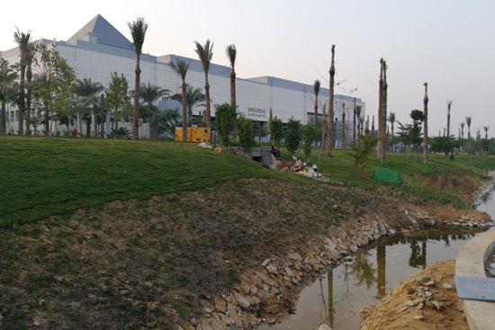 بحيرة عين الصيرة بالقاهرة تتحول لجنة خضراء (3)