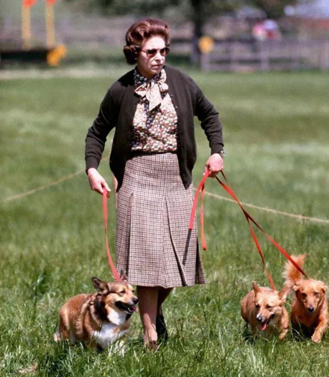 امتلكت الملكة نحو 30 كلبًا