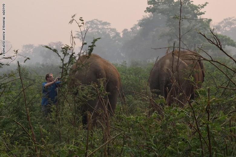 Golden Triangle Asian Elephant Foundation  (6)