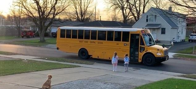 كلب يصطحب الأطفال إلى حافلتهم الدراسية كل يوم بأمريكا (1)