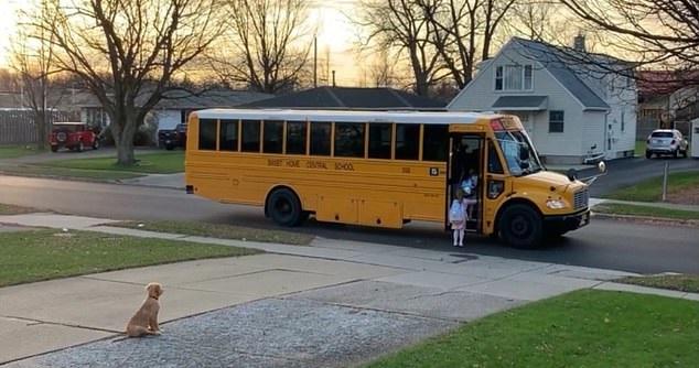 كلب يصطحب الأطفال إلى حافلتهم الدراسية كل يوم بأمريكا (3)