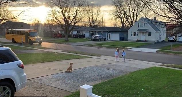كلب يصطحب الأطفال إلى حافلتهم الدراسية كل يوم بأمريكا (2)