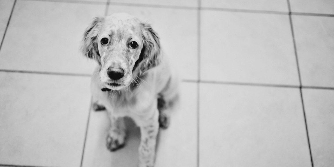 dog-1152x578