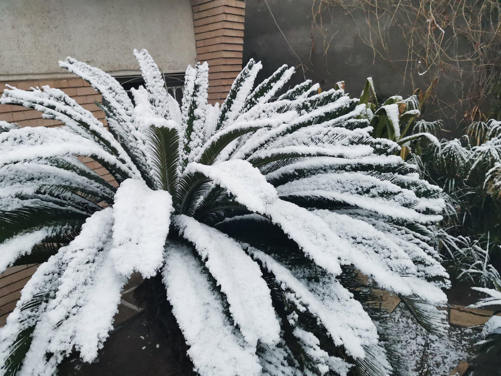 الثلوج تغطى الأشجار