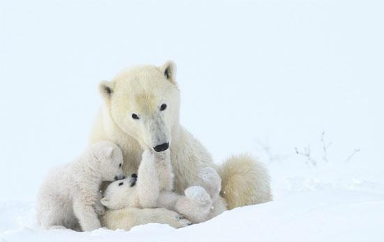 الحيوانات تعيش فى الجليد