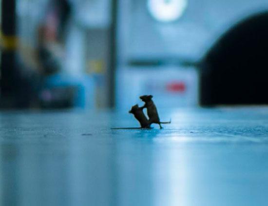 فأران فى محطة مترو
