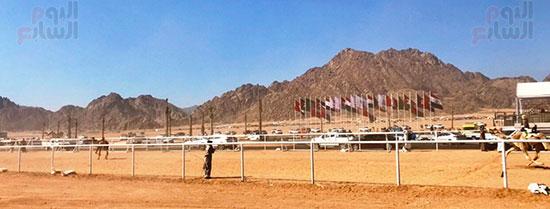 جولة سباقات هجن مصرية برعاية إماراتية (1)