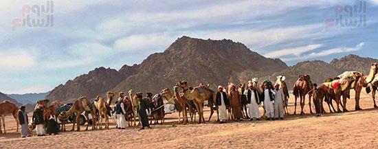 جولة سباقات هجن مصرية برعاية إماراتية (13)