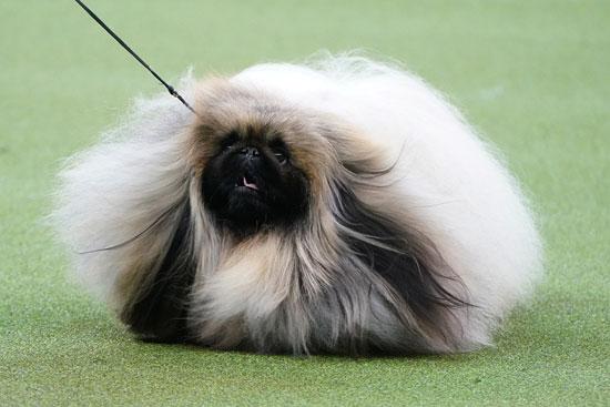 كلب يدعى واسابى