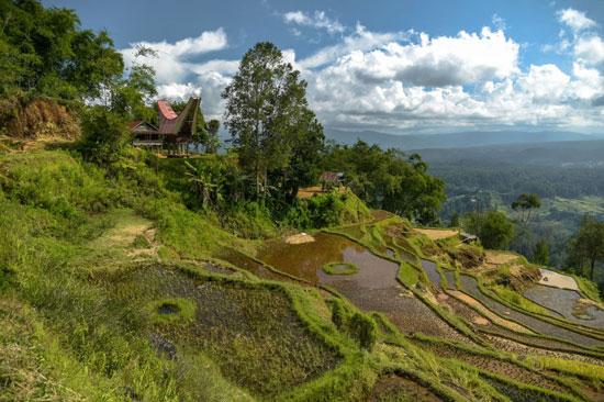 جزيرة سولاوسي، إندونيسيا