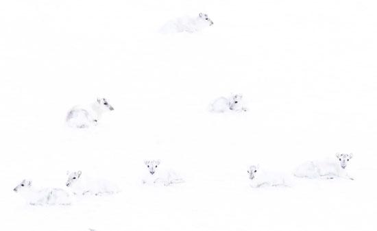 اندماج الحيوانات مع الثلج