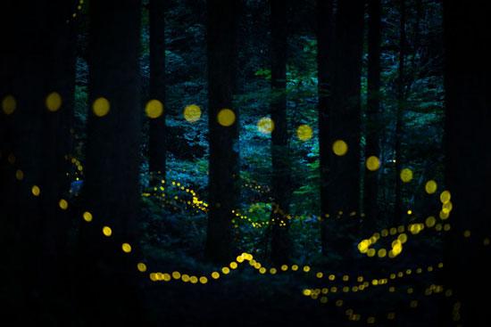 صراصير الليل تطير فى الغابة للمصور اليابانى ماساهيرو هيرويكى
