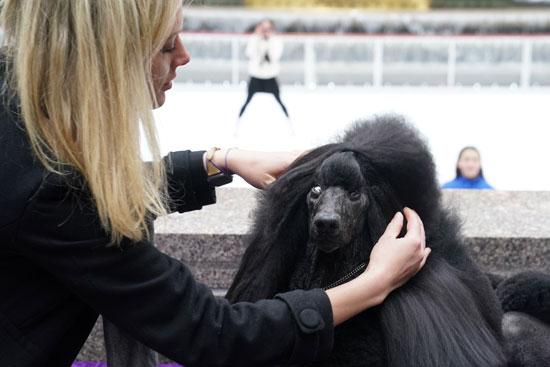 الكلبة سيبا تفوز بالجائزة الاولى لعرض بيت الكلب