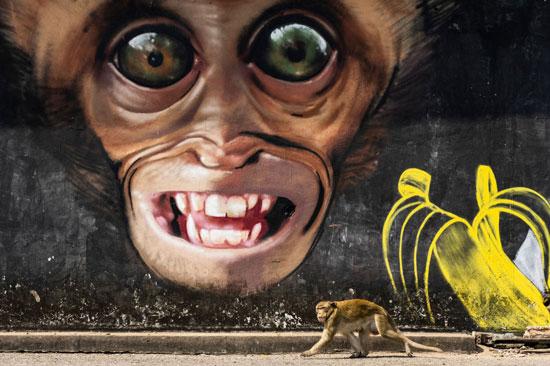 رسم غرافيتى للقرد للمصور الإسبانى خوان دى لا مالا