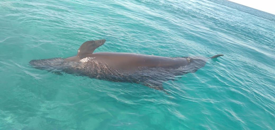 الحوت النافق بساحل الغردقة  (1)
