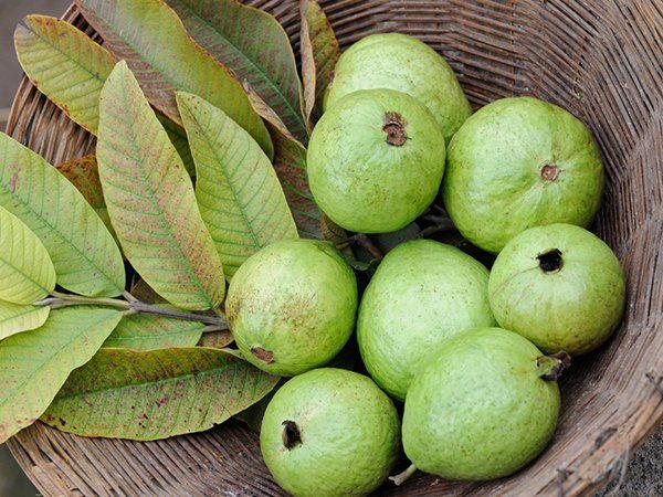 الجوافة تحتوى على الالياف