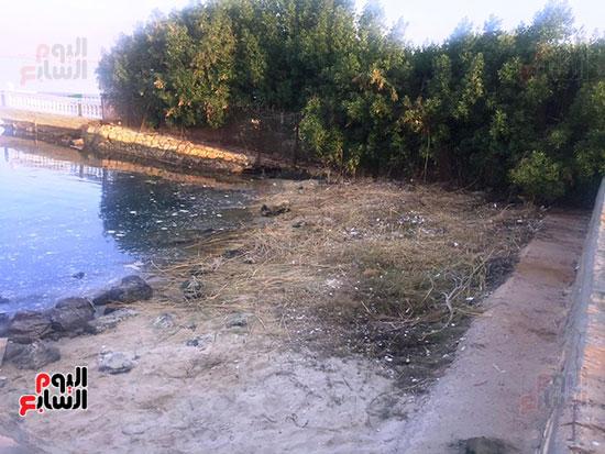 شباب بتحب مصر ينظفون شاطئ بحيرة التمساح بالإسماعيلية (13)
