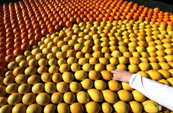 الليمون والبرتقال