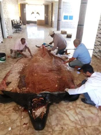 تحنيط الحوت (7)