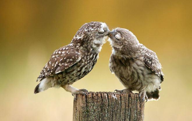 هل تشعر الحيوانات بالرومانسية مثل البشر (4)