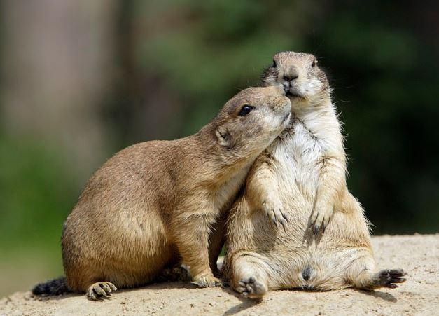 هل تشعر الحيوانات بالرومانسية مثل البشر (3)
